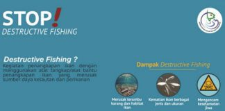 Stop Destructive Fishing