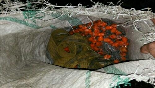 Foto : Barang Bukti Segel Berwarna Oranye Di amankan ke Polsek Cileungsi.