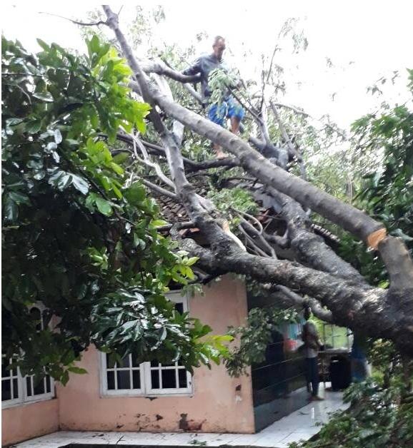 Pohon Tumbang Tidak Jauh dai Polsk Cileungsi