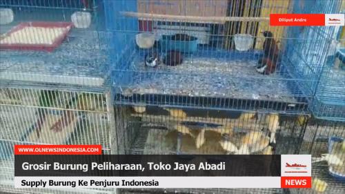 Jaya Abadi, Pusat Grosir Burung Peliharaan